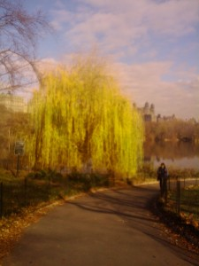 No Looking Back. Autumn in Central Park, 2011