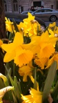 osm!yellowbells